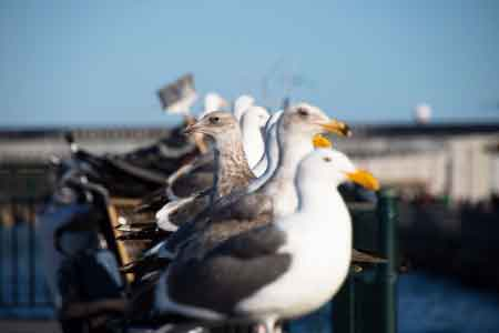 image of a seagull changing direction